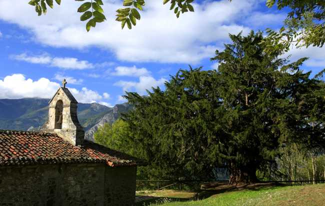 El Teixo de Bermiego, Asturias