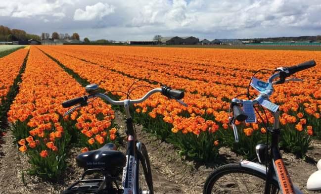 Bloemenroute. Holanda